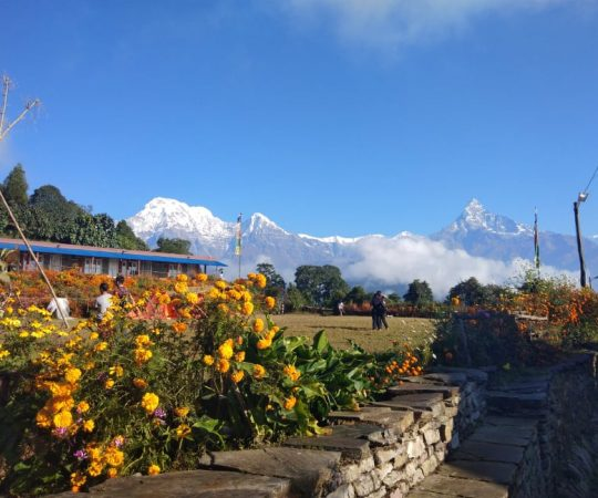 View of Machhapuchhre