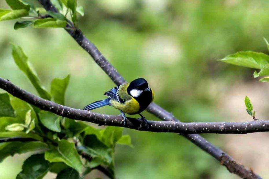 Bird Watching us in Bird watching Nepal tour