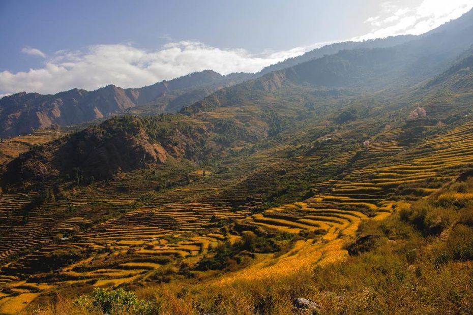 Terrain Paddy field of Ruby Valley Nepal